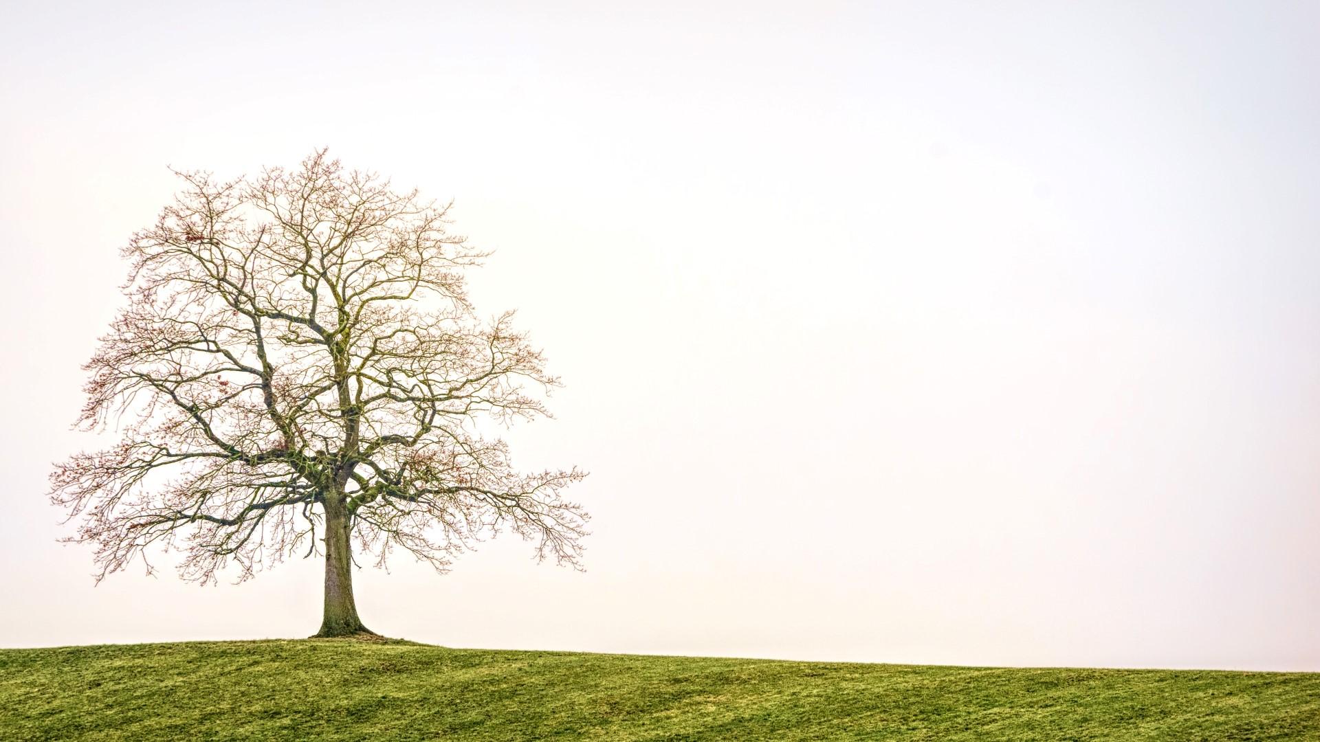 praktijkbeeldig boom